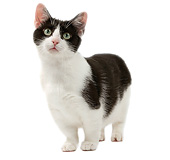 CAT 02 JE0349 01