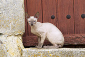 CAT 02 JE0360 01