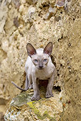CAT 02 JE0362 01