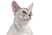 CAT 02 JE0364 01