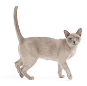 CAT 02 JE0365 01