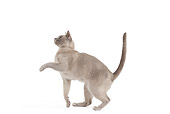 CAT 02 JE0366 01