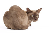 CAT 02 JE0367 01