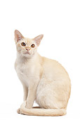 CAT 02 JE0368 01