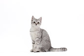 CAT 02 JE0372 01