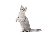 CAT 02 JE0373 01
