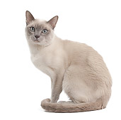 CAT 02 JE0375 01