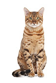 CAT 02 JE0381 01