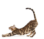 CAT 02 JE0382 01