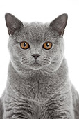 CAT 02 JE0387 01