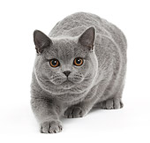 CAT 02 JE0389 01