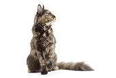 CAT 02 JE0390 01