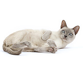 CAT 02 JE0399 01