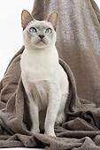 CAT 02 JE0400 01