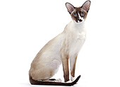 CAT 02 JE0401 01