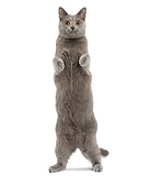 CAT 02 JE0403 01