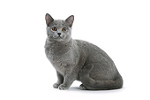 CAT 02 JE0404 01