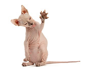 CAT 02 JE0408 01
