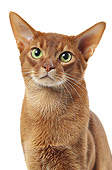 CAT 02 JE0410 01