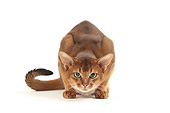 CAT 02 JE0411 01