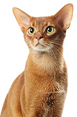 CAT 02 JE0417 01