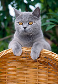 CAT 02 JS0001 01