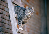CAT 02 JS0002 01