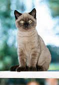 CAT 02 JS0006 01
