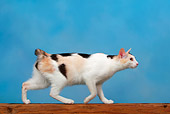 CAT 02 KH0002 01