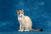 CAT 02 KH0015 01