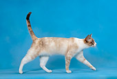 CAT 02 KH0016 01