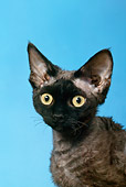 CAT 02 KH0025 01