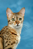 CAT 02 KH0033 01