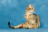 CAT 02 KH0034 01