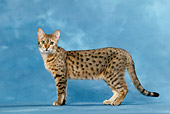 CAT 02 KH0035 01