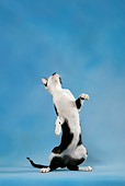 CAT 02 KH0036 01