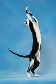 CAT 02 KH0038 01