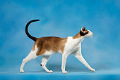CAT 02 KH0044 01