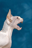CAT 02 KH0045 01