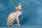 CAT 02 KH0049 01