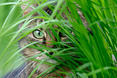 CAT 02 KH0064 01