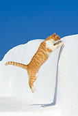 CAT 02 KH0303 01