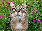 CAT 02 KH0309 01