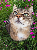 CAT 02 KH0310 01
