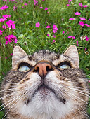 CAT 02 KH0312 01