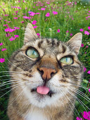 CAT 02 KH0313 01