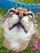 CAT 02 KH0314 01