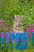 CAT 02 KH0316 01