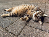 CAT 02 KH0317 01
