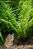 CAT 02 KH0318 01